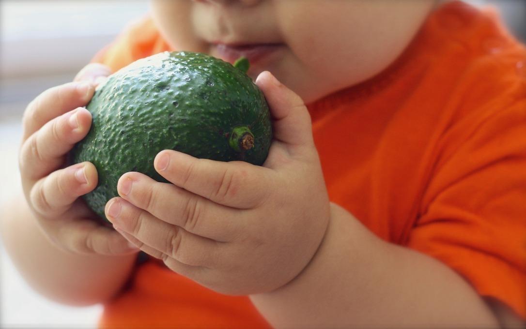 avocado-1476493_1920