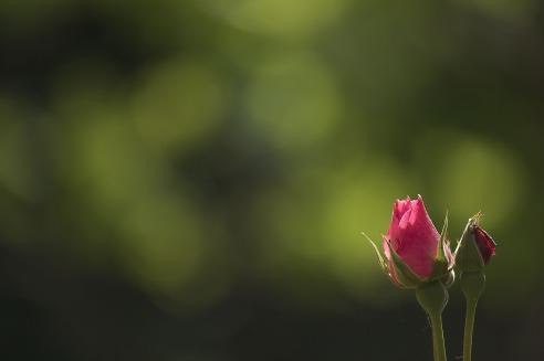 flower-3178744_1920