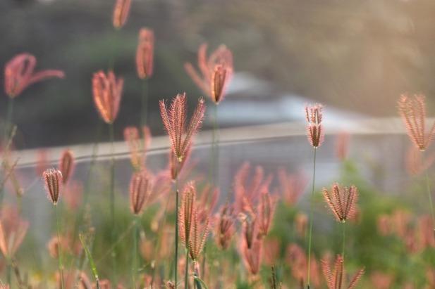 grass-3395428_1920